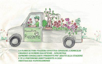 Disponibilità piante